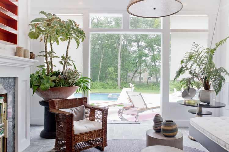 plantas para interiores de casa