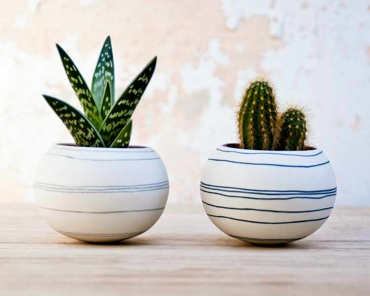 Cactus caracteristicas