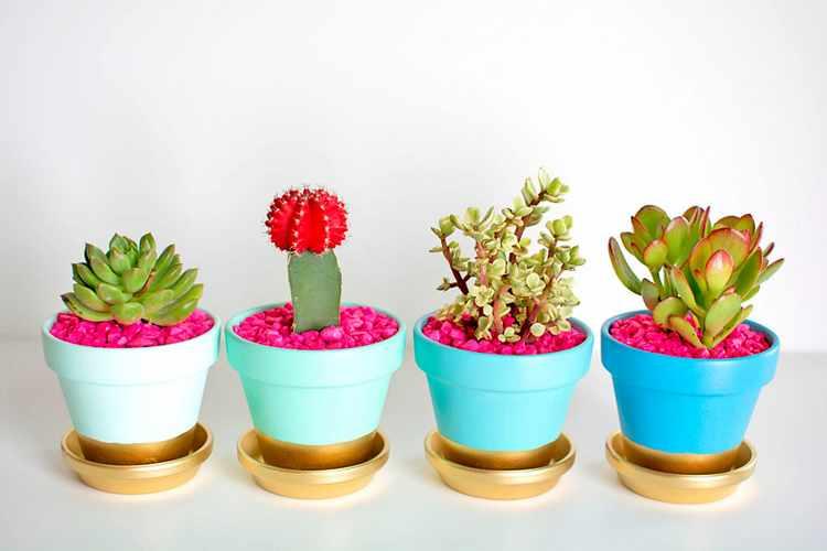Cactus con hojas