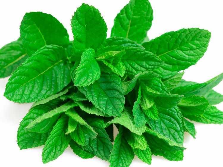 que son las plantas medicinales