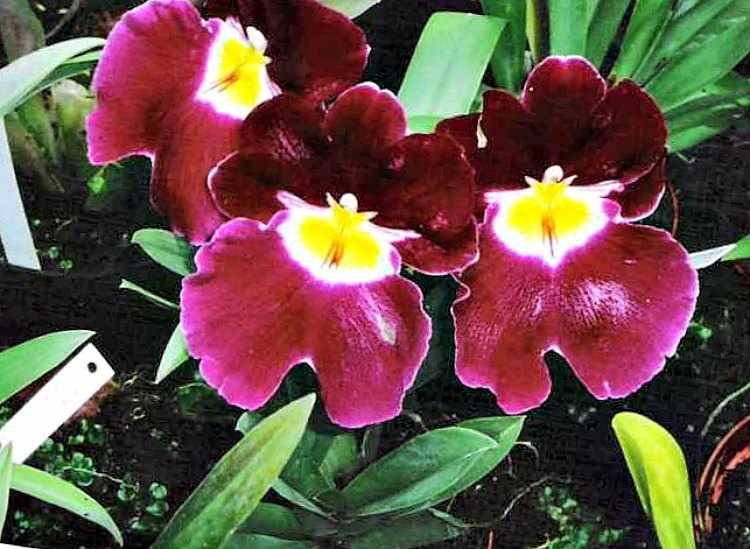 cuidados de las orquideas para que florezcan