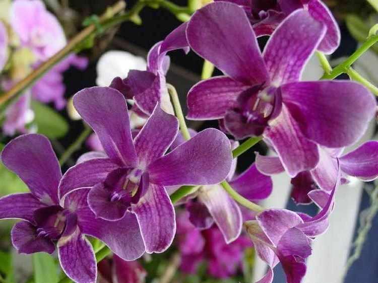 orquideas cuidados basicos