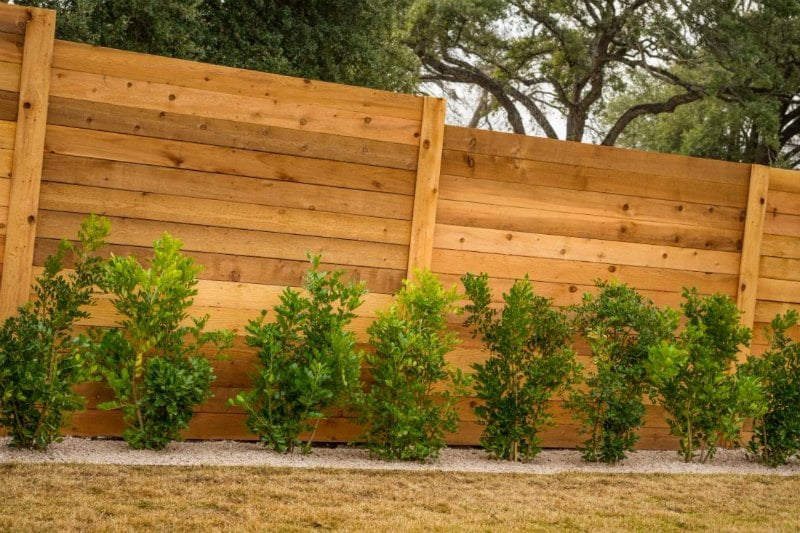 tipos de arbustos para jardin