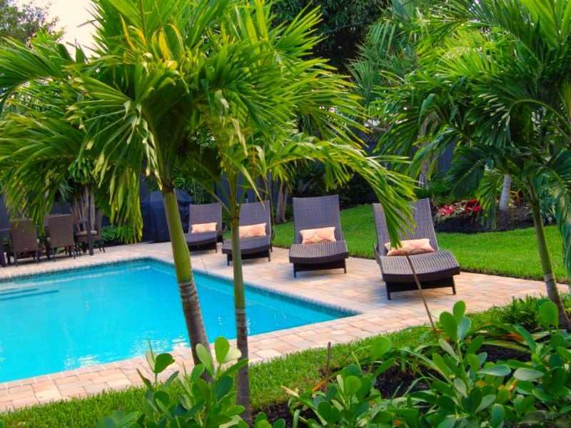 palmeras interior exterior