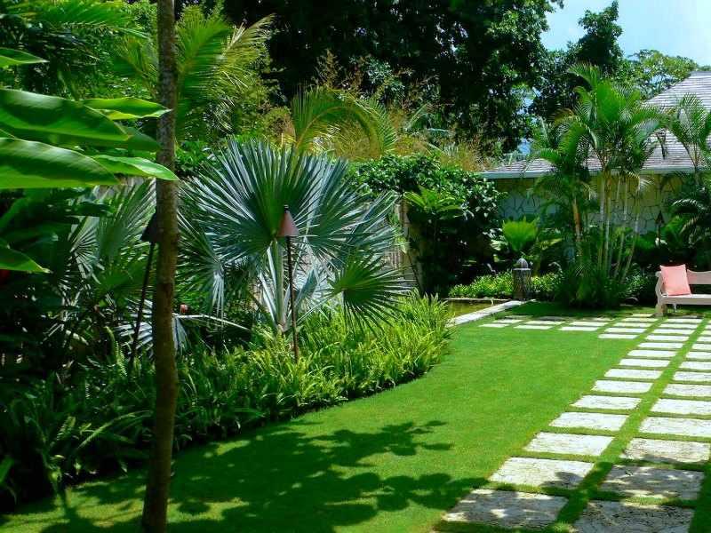 palmeras de jardin exterior