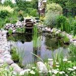 Jardin con plantas acuaticas