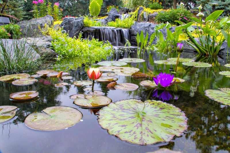 Jardin con plantas acuaticas zen tipos y como hacerlo Estanque natural como hacerlo