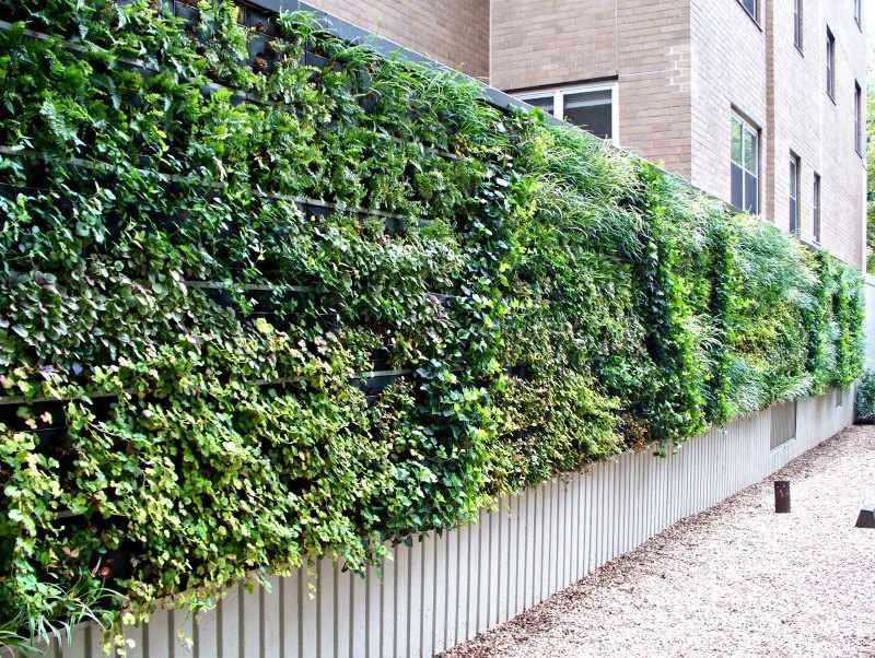 tipos de plantas trepadoras para muros