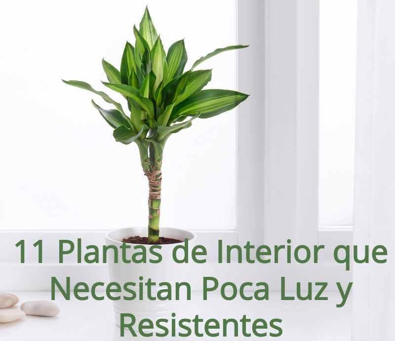 11 plantas de interior que necesitan poca luz y resistentes